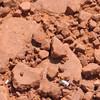 Hardest Working Ant in Show Business, Sedona, AZ