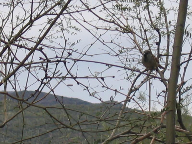Black Canyon Bird <br /> Beautiful Black Canyon City, Arizona