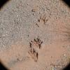 Tracking, Sedona, AZ
