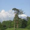 Wroxton Pine