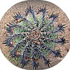 Pinwheel <br /> San Jose del Cabo, Mexico