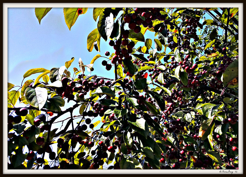 2012-09-14_11-10-33_HDR