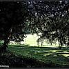 Greenfields <br /> ©2008 FlorieGray, Wroxton