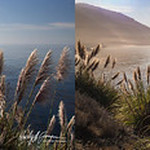 Sea Grass Big Sur