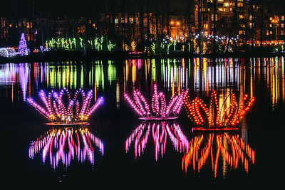 Lotus Lights