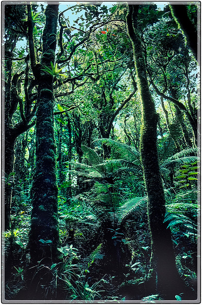 Bosque del Yunque