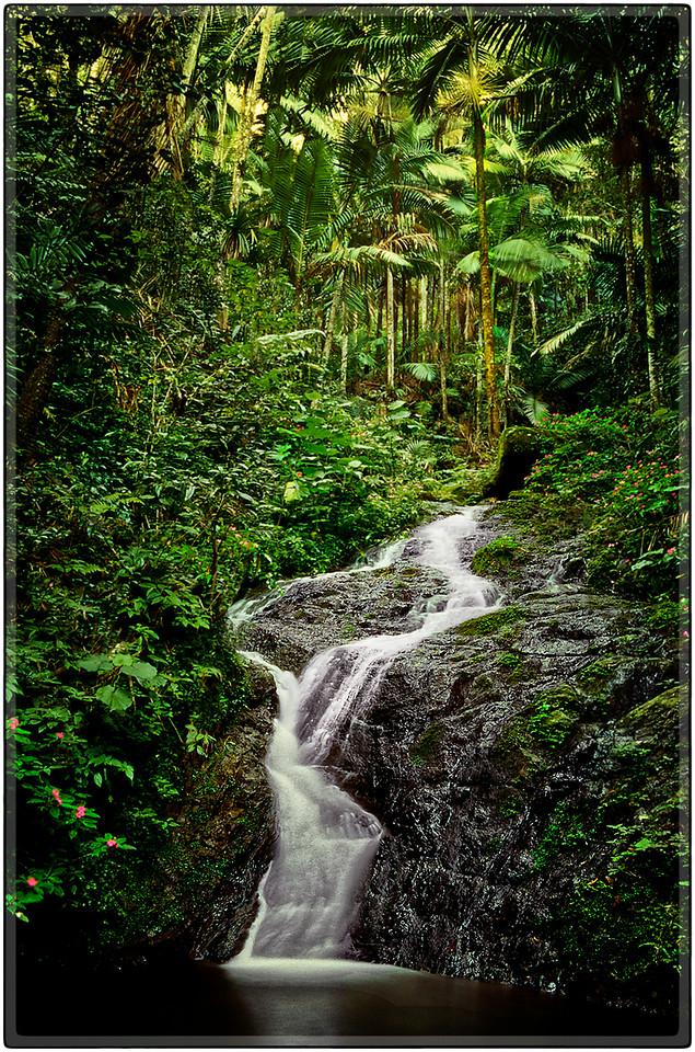 Bosque de Guavate
