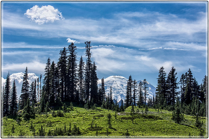 Beyond the Trees, Mount Rainier, Washington