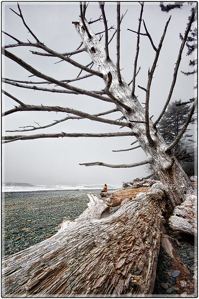 Fog on the Beach, Washington