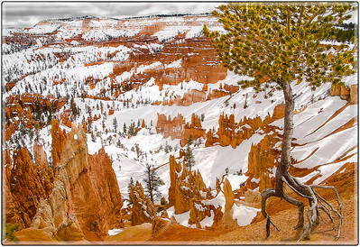 Bryce in the Winter