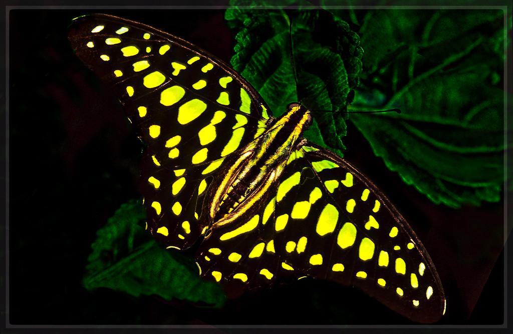 Neonbutterfly