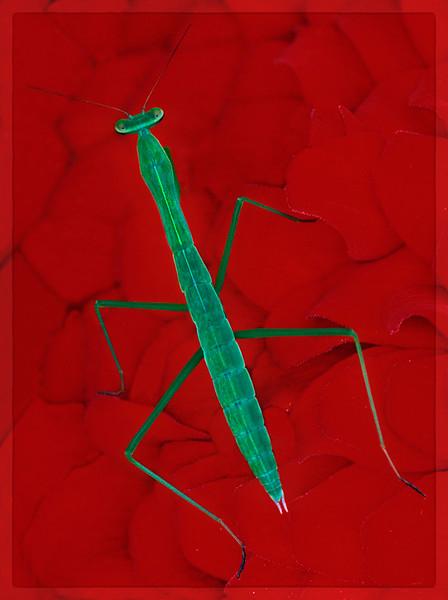 Neon Mantis