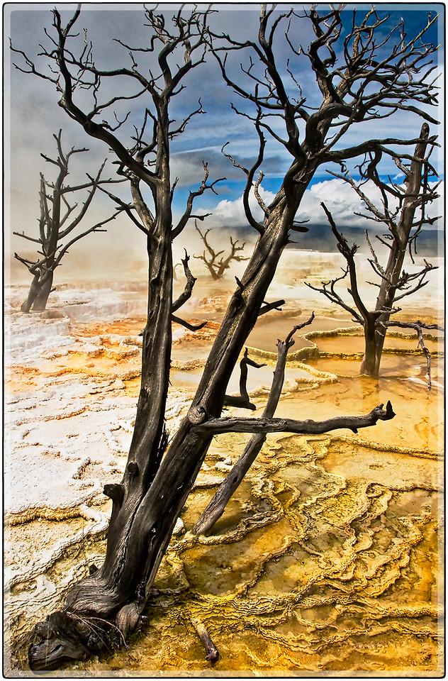 Petrified, Yellowstone