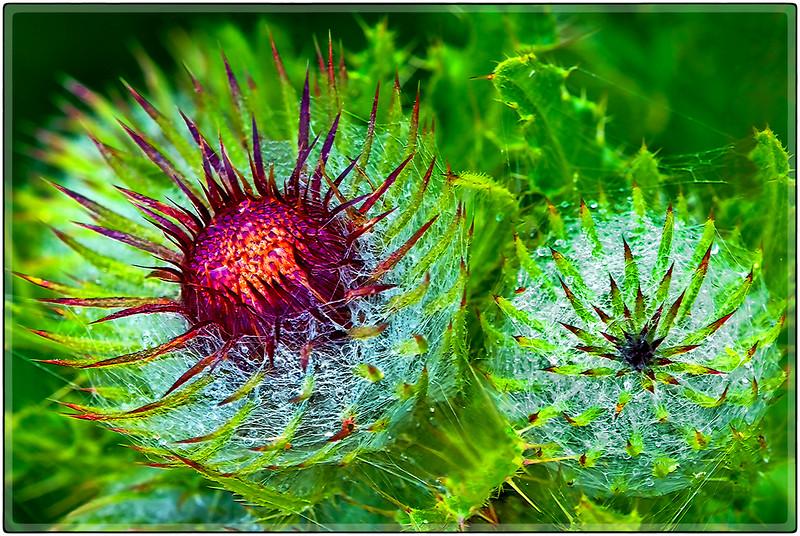 Web Flowers
