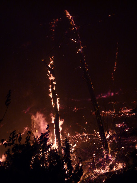 Wildfire in Lavagna, Italy,<br /> <br /> Incendio a Lavagna (GE)