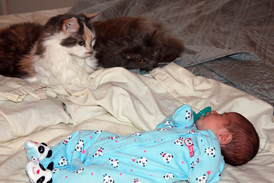 Lila, 9 days old, hanging with Muffy and Binky.