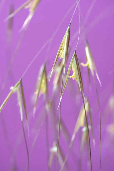 Grass Flowers 2