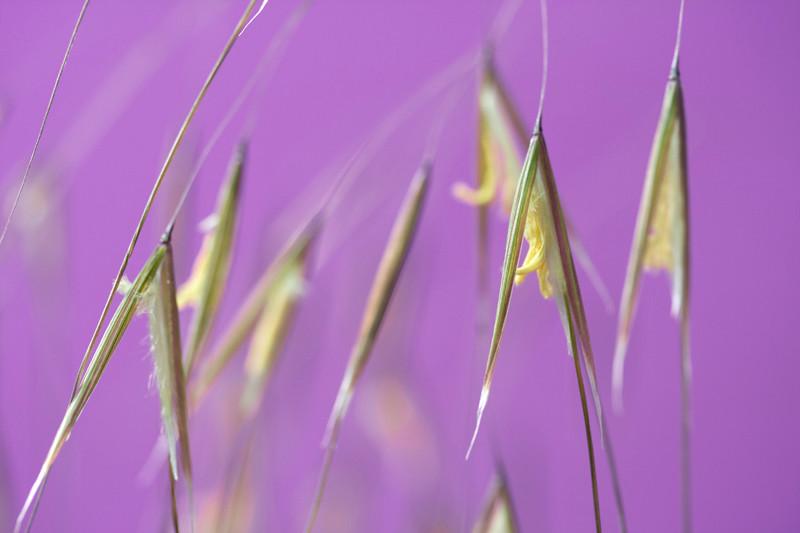 Grass Flowers 1