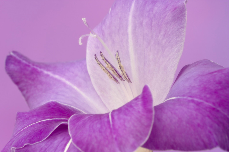 Violetta 1