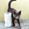 21 - Hobie cat - 1979