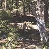 10 - 4 - Larry at Tahoe