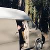 19 - Sequoia