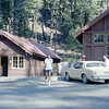 18 - Sequoia