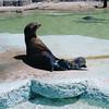 21 - SF Zoo