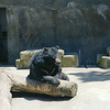 22 - SF Zoo