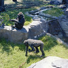 16 - SF Zoo
