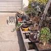 Bonsai 2-15-04 009