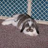 bunnies 2-8-04 001