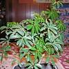 bonsai 2-10-04 005