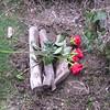 Pet funeral - Ralf, Liz, WaffleMan 005