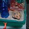 Leoni - hamster 003