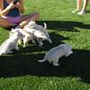 Puppies 001