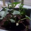 Suzy's plants