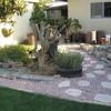 Grandma's backyard 006 (Small)