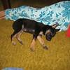 puppy 010