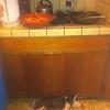 Dexter in kitchen