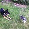 Dexter and Kenya 8-26-11