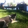 Dexter in backyard