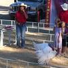Sonoma County Fair-Turkey races3