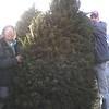 Christmas tree - 3