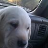 Donna Vis dog - Cooper