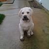 Donna Vis dog - Cooper dirty