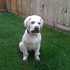 Donna Vis dog - Cooper on grass