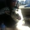 Dexter in car