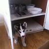 Dexter in cupboard