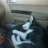 Dexter sleeping in car